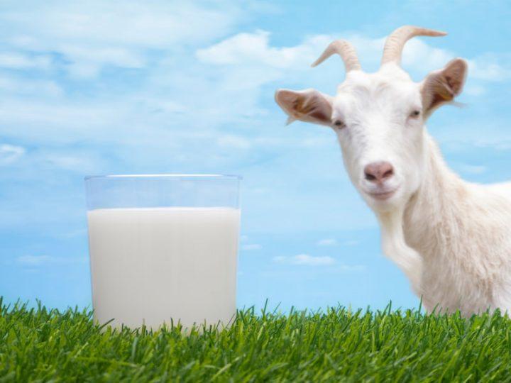 Козье молоко при псориазе