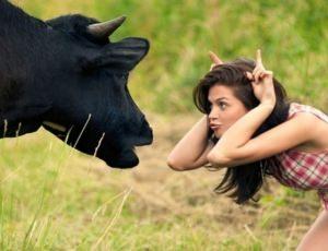 Ветеринарный крем для коров